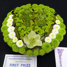succulents first prize